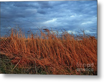 Farmland Winter Metal Print by Susan Yates