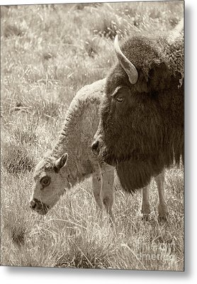 Metal Print featuring the photograph Father And Baby Buffalo by Rebecca Margraf