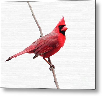Father's Day Cardinal Metal Print