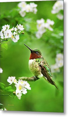 Fauna And Flora - Hummingbird With Flowers Metal Print