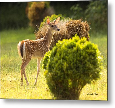 Metal Print featuring the photograph Fawn by Angel Cher