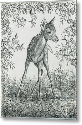 Fawn In Clearing Metal Print by Samuel Showman