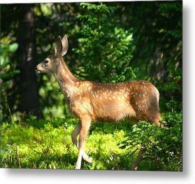 Metal Print featuring the photograph Fawn In Woods by Perspective Imagery