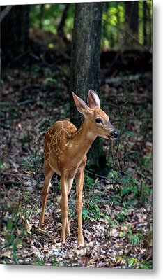 Fawn Metal Print by Michael Demagall