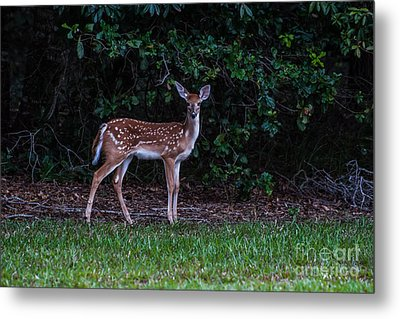 Fawn Near The Forest Metal Print by Zina Stromberg