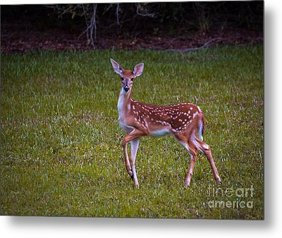 Fawn Metal Print by Zina Stromberg