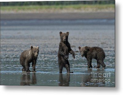 Fearsome Threesome Metal Print by Sandra Bronstein