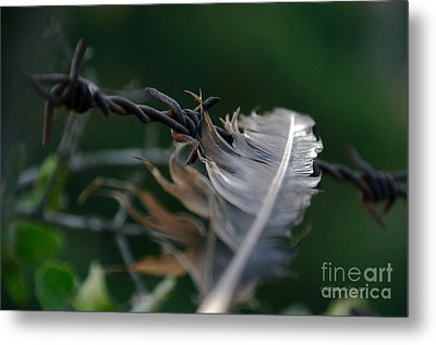 Feather And Barbed Wire Metal Print