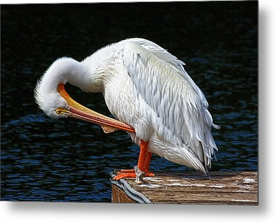 Feather Check Metal Print by HH Photography of Florida