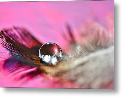 Metal Print featuring the photograph Feather Drop by Diane Alexander