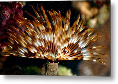 Feather Duster Metal Print by Anthony Jones