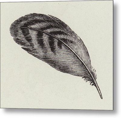 Feather Metal Print by English School