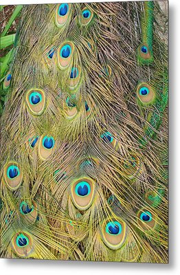 Metal Print featuring the photograph Feather Finesse by Margaret Bobb