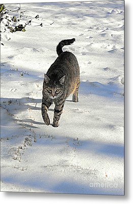 Feather In Snow Metal Print