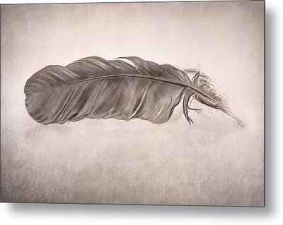 Feather Metal Print by Scott Norris