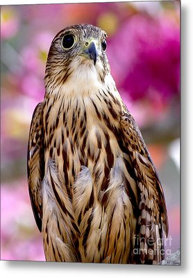 Feathered Wizard Metal Print