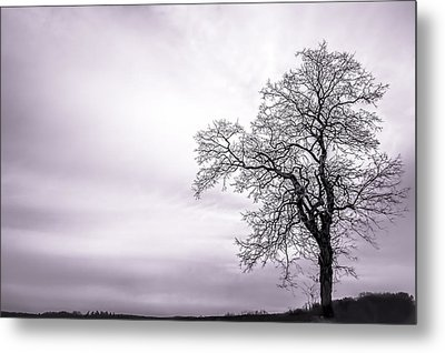 February Morning Metal Print