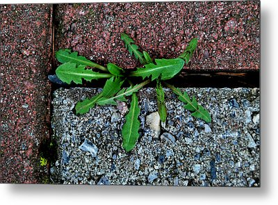 Metal Print featuring the photograph February Surprise by Marilynne Bull