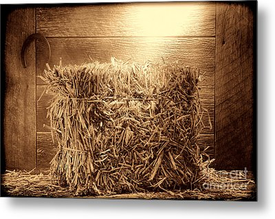 Feed Metal Print by American West Legend By Olivier Le Queinec