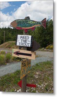Feed The Trout Metal Print by Suzanne Gaff