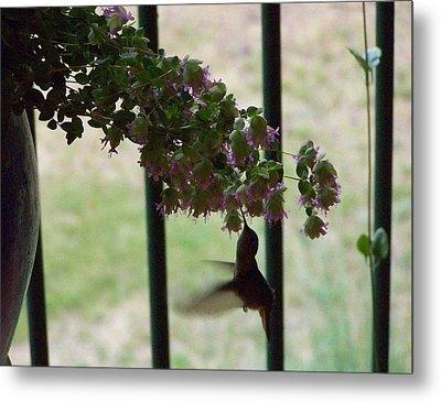 Feeding Hummingbird Metal Print