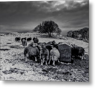 Metal Print featuring the photograph Feeding Time by Keith Elliott