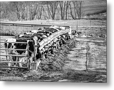 Feedlot Metal Print