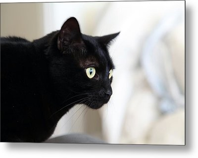 Feline On The Prowl Metal Print