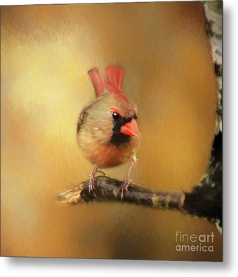 Metal Print featuring the photograph Female Cardinal Excited For Spring by Darren Fisher