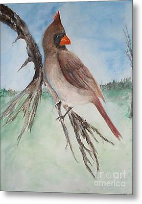 Metal Print featuring the painting Female Cardinal by Sibby S
