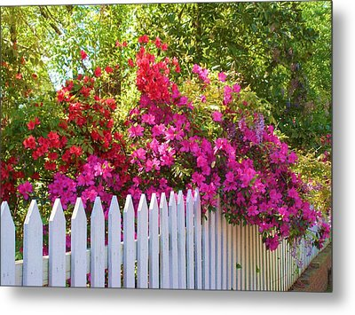 Fence Of Beauty Metal Print by Jeanette Oberholtzer