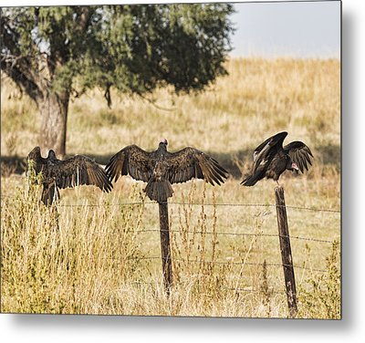 Metal Print featuring the photograph Fence Post Vultures by Bill Kesler