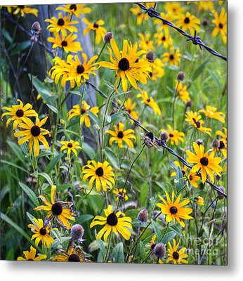 Fence Row Flowers Metal Print by Pete Hellmann