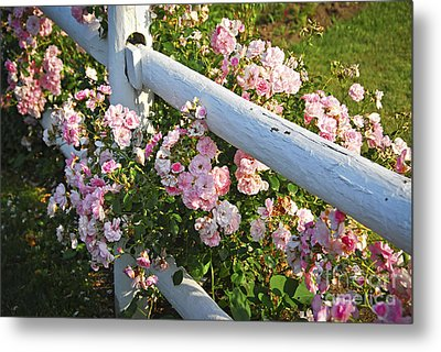 Fence With Pink Roses Metal Print