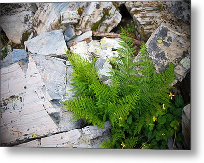 Fern Among Glacial Rock Metal Print
