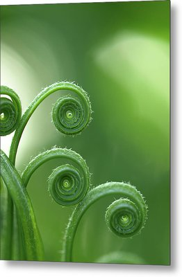Fern In Forest Metal Print