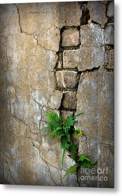 Fern Life Metal Print by Perry Webster