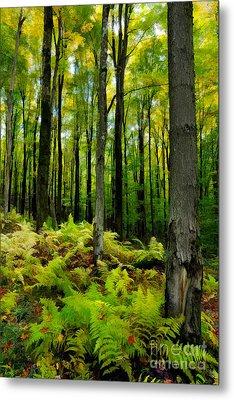 Ferns In The Forest - West Virginia Metal Print by Dan Carmichael