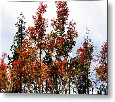 Festive Fall Metal Print by Karen Shackles