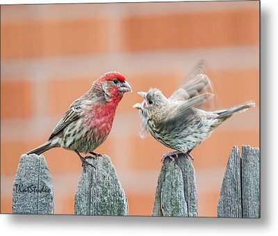 Feuding Finches Metal Print