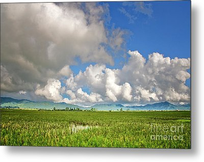 Metal Print featuring the photograph Field by Charuhas Images