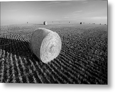 Field Full Of Bales In Black And White Metal Print