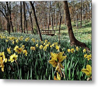 Field Of Daffodils Metal Print