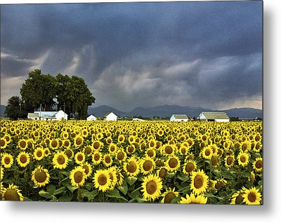 Field Of Flowers  Metal Print by James Steele