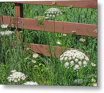 Metal Print featuring the photograph Field Of Lace by Ann Horn