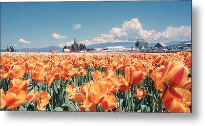 Field Of Orange Metal Print by Ansel Price
