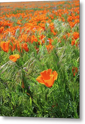 Metal Print featuring the mixed media Field Of Orange Poppies- Art By Linda Woods by Linda Woods