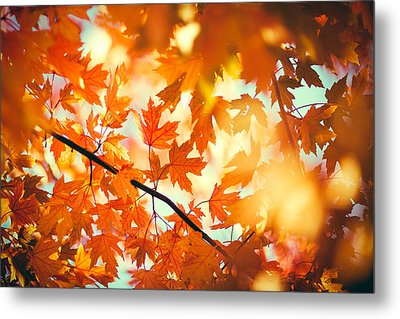Field Of Orange Metal Print by Todd Klassy
