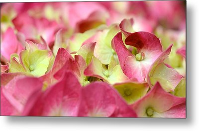 Metal Print featuring the photograph Field Of Petals by Corinne Rhode