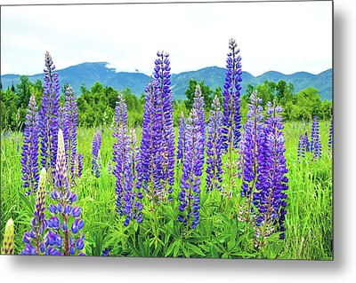 Metal Print featuring the photograph Field Of Purple by Greg Fortier